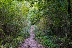 Small forest path in autumn season view with daylight. And trees Stock Photography