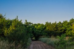 A small forest path among thickets of wild acacia. The road leading to the creek. Morning sports jogging in the woods. royalty free stock photos