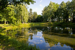Small forest pond stock photos