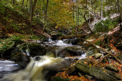 Small forest river Stock Photo