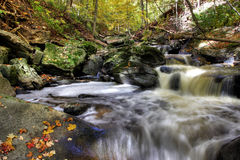 Small forest river stock image