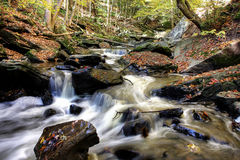 Small forest river Royalty Free Stock Image