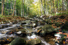 Small forest river Royalty Free Stock Photos