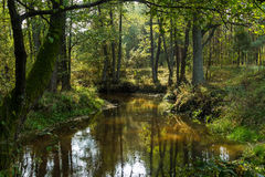 Small forest river. Fall. Royalty Free Stock Photography