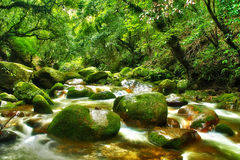The small forest river Stock Images