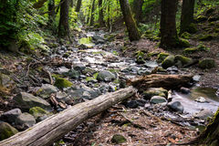 Small forest river Royalty Free Stock Images