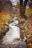 Small forest stream Stock Image