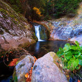 Small forest waterfall in deep forest Royalty Free Stock Photography