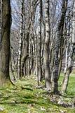 Small forest in Zakopane Stock Image