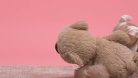 Small but formidable beagle puppy tormenting toy bear, having fun, slow-motion. Stock footage stock video footage