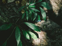 Small forrest plant. Royalty Free Stock Photo