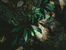 Small forrest plant. Royalty Free Stock Photography