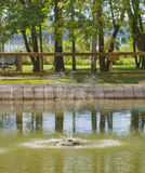 Small fountain in the park pond. Small fountain in the public park pond Royalty Free Stock Photos