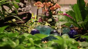 A small fountain among stones in a flowered indoor garden. Close-up. stock video footage