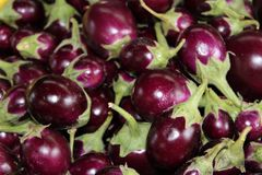 Eggplants. Stock Photography