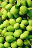 Small Fresh green mangoes . Mangifera indica L. Var.  royalty free stock images
