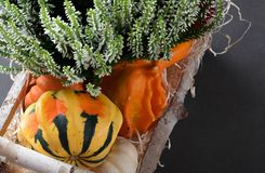 Small fresh pumpkins and heather in a birch basket Royalty Free Stock Photo