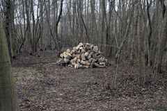 Small fresh wood alder ash tree pile in small forest grove wood nutwood Royalty Free Stock Photography