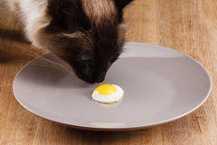 Small fried egg on a plate Stock Photo