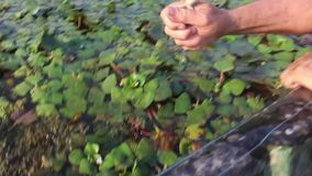 Small frog jumping in hand stock video