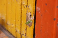 Small frog stick with the red metal door stock images
