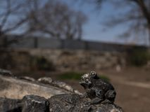 small frog stone figure outdoor stock photography