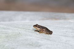 Small frog on the white textile Stock Photo