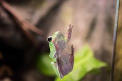 Small frog on window. Macro photo from inside stock images