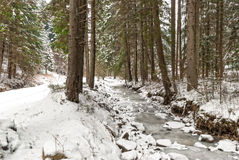Small frozen river in the forest Royalty Free Stock Image