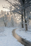 Small frozen river and trees in winter Royalty Free Stock Photography