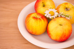 Small fuji apples on a plate Stock Image