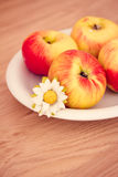 Small fuji apples on a plate Royalty Free Stock Photo