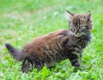 Small funny kitten Stock Photography