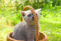 Small funny kitten. Sitting in a basket Royalty Free Stock Photography