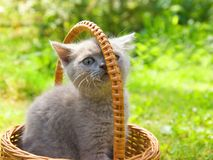 Small funny kitten. Sitting in a basket Royalty Free Stock Photos
