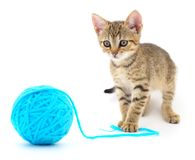 Small funny kitten and clew of thread . stock image