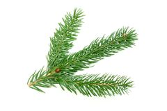Small fur-tree branch on a white background stock images