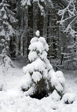 Small fur-tree fallen asleep by a snow. On a background of a wood Stock Photos