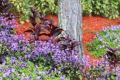Small Garden. A view of a small tropical garden Stock Photos