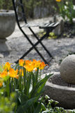 Small garden Royalty Free Stock Photography