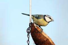 Small garden bird Royalty Free Stock Photos