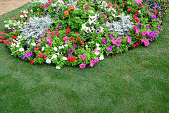 Small garden. A small garden decorated by using ferns , small leafy and flowering plants Stock Photos