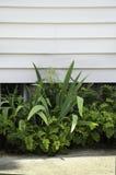Small Garden Stock Image