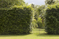 Small iron Gate to idyllic formal garden. Wrough Iron low gate as entrance to beautiful, green, bushy, landscaped English cottage garden, between hedge fence Royalty Free Stock Image