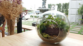 Small garden in the glass bowl. With rabbit sculpture Royalty Free Stock Photography