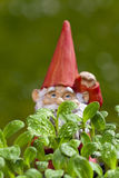 Small garden gnome behind borage plant Royalty Free Stock Photography