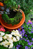 Small garden in my home with small plants Stock Photography