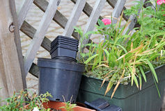 Small garden pots flowers Royalty Free Stock Photography