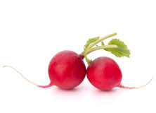 Small garden radish Royalty Free Stock Images