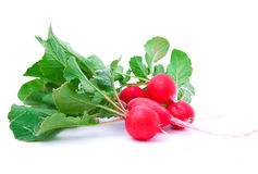 Small garden radish Stock Image